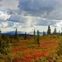 Summit Trail, North of Fairbanks, Alaska