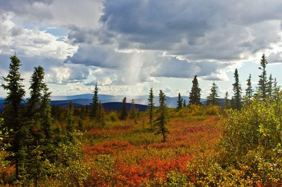 Summit Trail, North of Fairbanks, Alaska