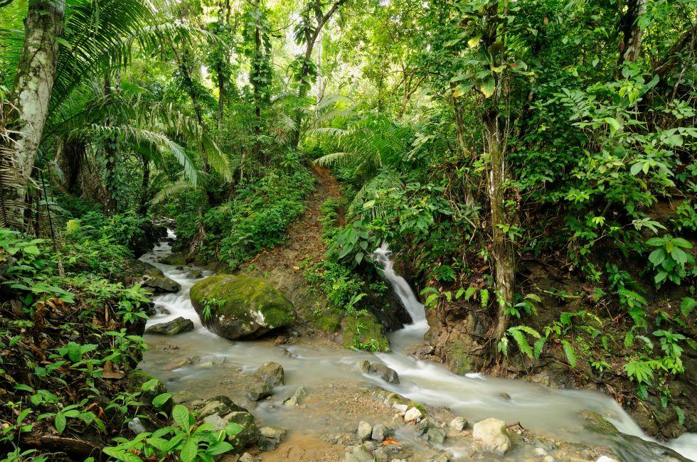 Jungle, The Darien, Eastern Panama, Panama, Mexico and Central America
