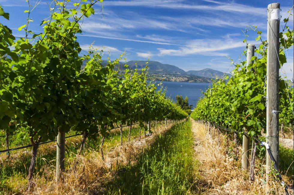 Vineyard, Okanagan Wine Coutry
