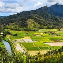 Taro Fields, Hanalei Valley, Kauai, Hawaii