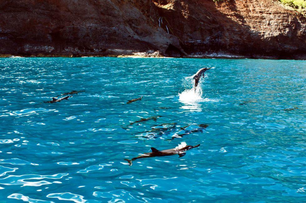 Dolphins, Na Pali Coast, North Shore Kauai, Kauai, Hawaii, USA.