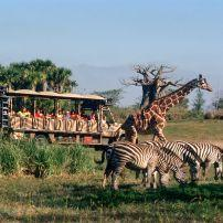Kilimanjaro Safaris, Walt Disney World, Orlando, Florida, USA