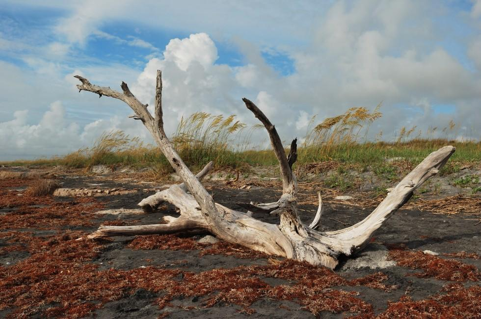 Driftwood, Little Talbot Island State Park, Fort George Island, Florida, USA