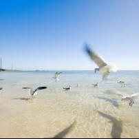 Beach, Seagulls, Duck Key, The Florida Keys, Florida, USA