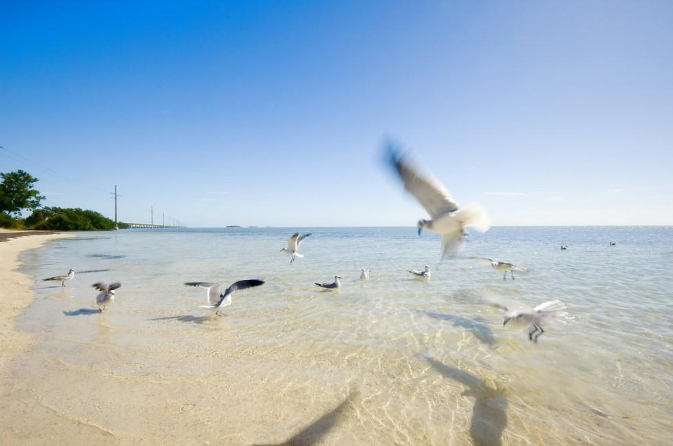 Beach, Seagulls, Duck Key, The Florida Keys, Florida, USA