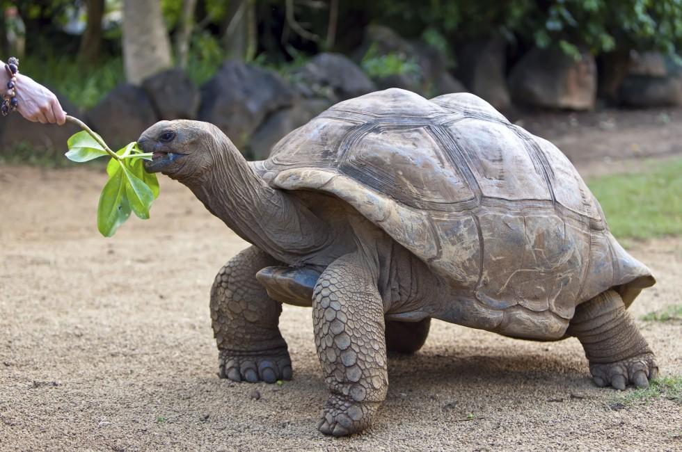 Turtle, Seychelles