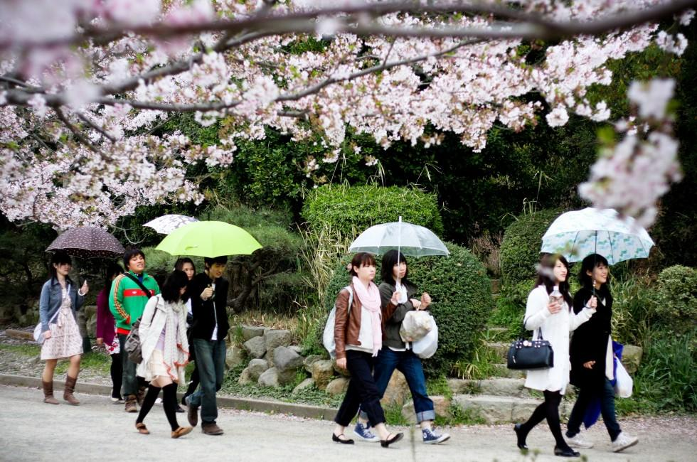 Cherry Blossom Celebration, Akashi Castle, Kobe, Japan