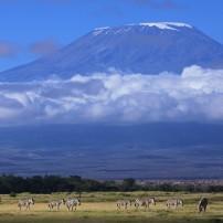 Zebra, Mount Kilimanjaro, Tanzania