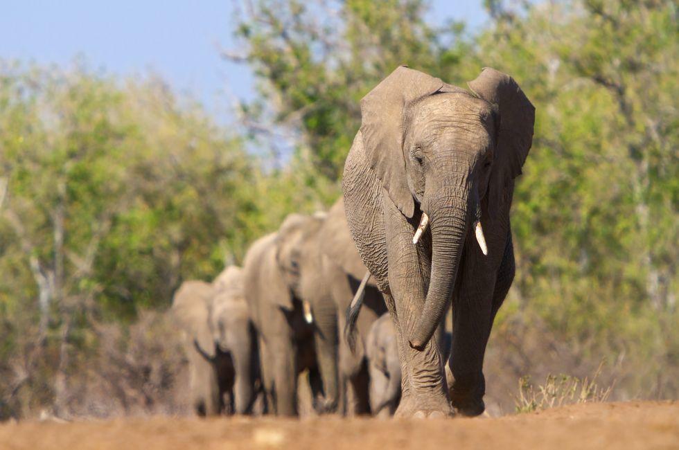 Elephants, Mashatu Game Reserve, Botswana