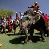 Swinging the mallet at an elephant polo match, Jaipur
