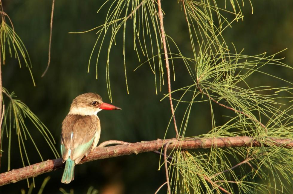 Bird, Tree, Richards Bay, Durban and KwaZulu-Natal, South Africa