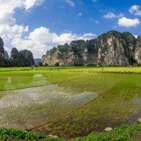 Man, Goats, Rice Field, Ninh Binh, Vietnam