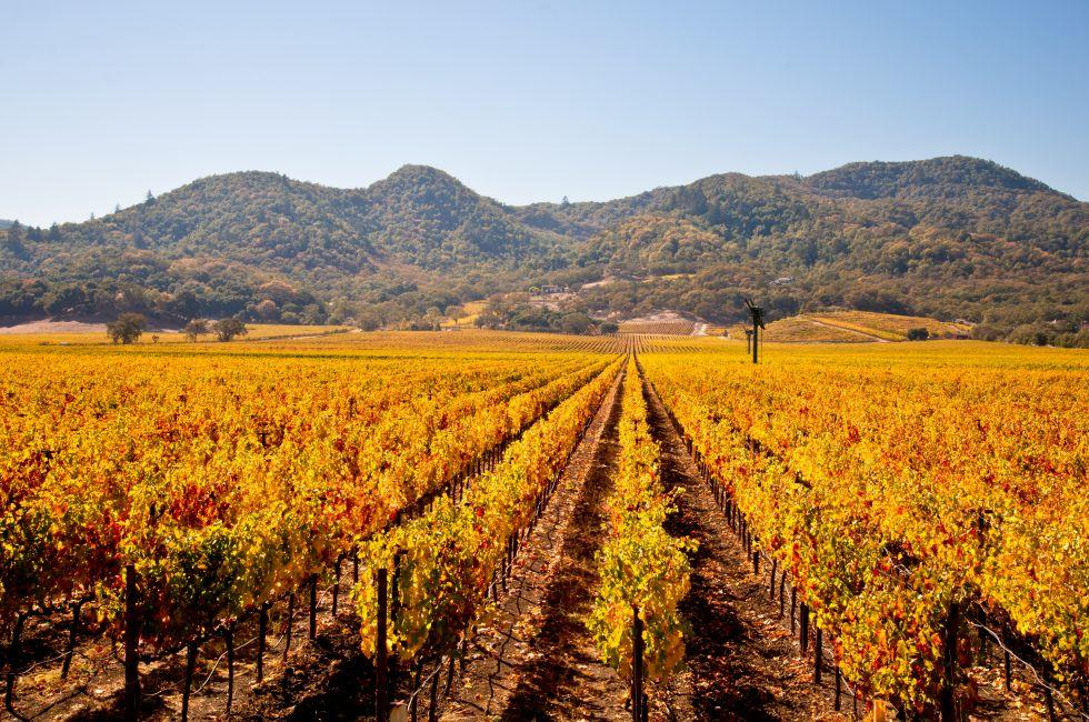 Vineyards, Napa Valley, California