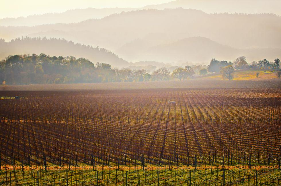 Vineyard, St. Helena, Napa Valley, California