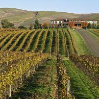 Vineyard, Sonoma, California