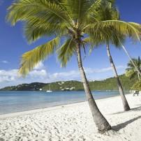 Beach, Palm Tree, Magens Bay, St. Thomas, USVI, Caribbean