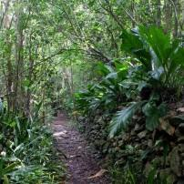Jungle, Path, Reef Bay Trail, St. John, USVI
