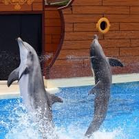 Dolphins, Seaworld Orlando, Florida, USA