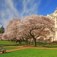 Campus, University of Washington, University District, Seattle, Washington, USA