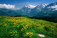 recommendations for Swiss Alps hikes-1969536ea98050a1d3360ee146d3937f.jpg