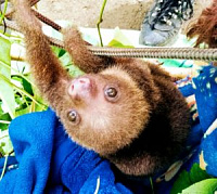 Volunteering for the Jaguar Rescue Centre in Costa Rica-img_20181114_132450-300x268.jpg