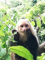Volunteering for the Jaguar Rescue Centre in Costa Rica-img_20181124_101432-225x300.jpg