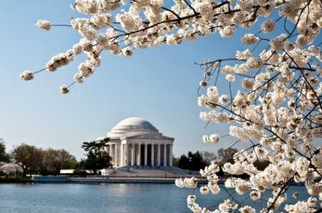Insider's Guide to the 2014 National Cherry Blossom Festival