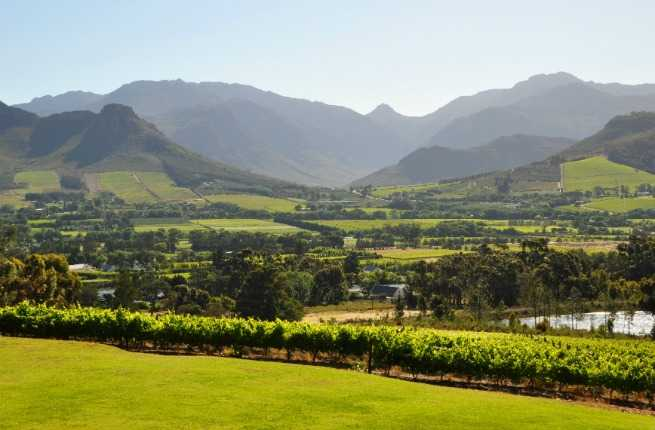 Wine Lover's Guide to South Africa