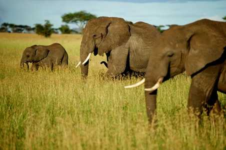 5 Safaris That Help Save Wildlife