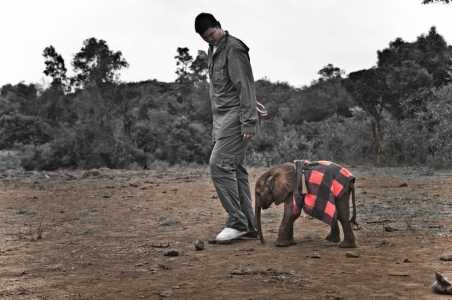 Q&A: Former NBA Superstar and Animal Advocate Yao Ming