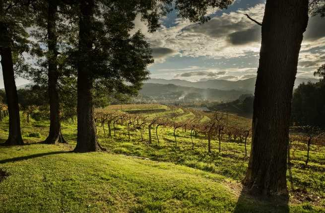 Wine Lover's Guide to Galicia, Spain