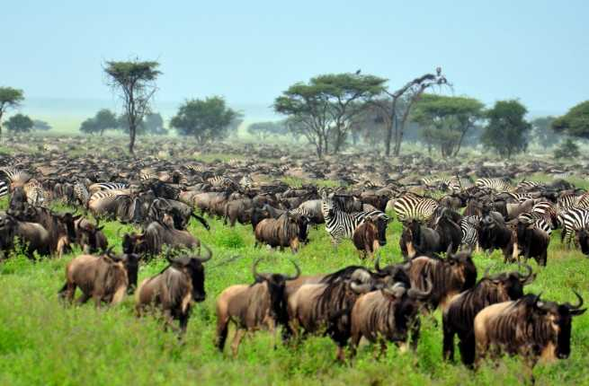 top-10-african-safari-outfitters.jpg