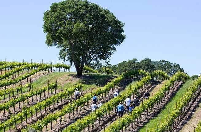 jordan-winery-spring-vineyard-hike-healdsburg-img_5295.jpg