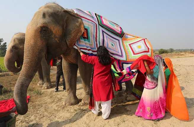Roger allen elephants 4