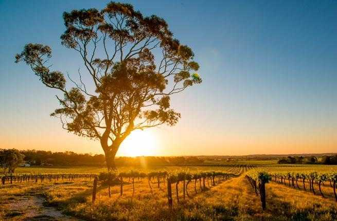 4-barossa-valley-australia