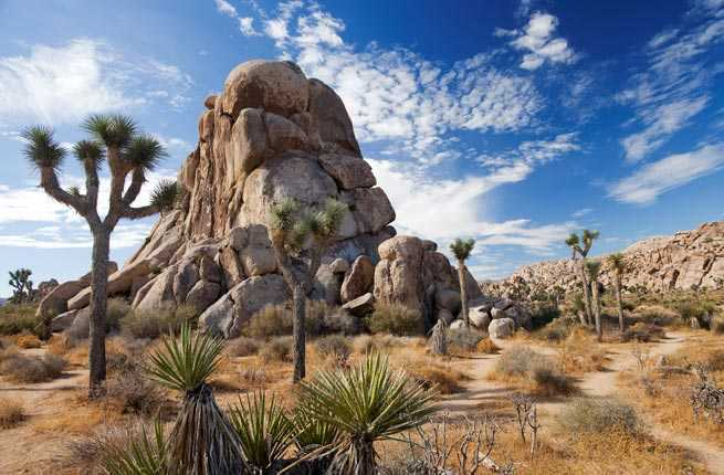joshua-tree-california-2.jpg