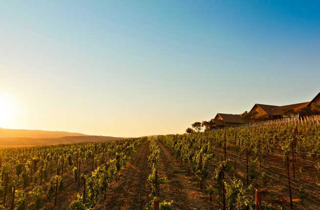1-rams-gate-winery-hero.jpg