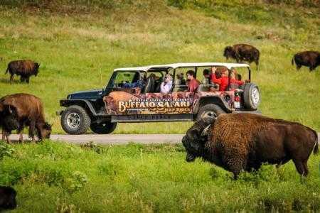 5-buffalo-safari-jeep-tour-south-dakota