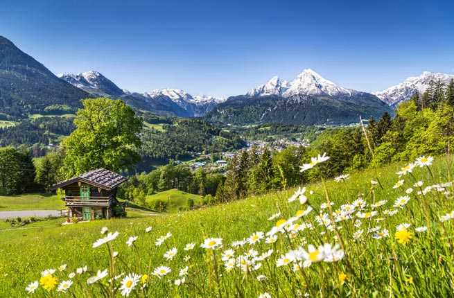15-wildflowers---bavaria-germany.jpg