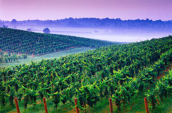 undiscovered-north-american-wine-regions-hero.jpg