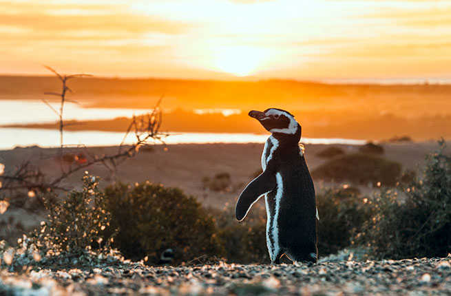 patagonias-big-ten-magellanic-penguins.jpg
