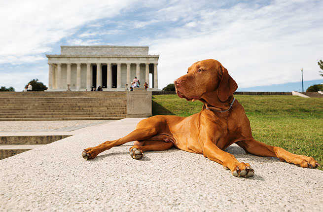 dog-cities-washington-dc.jpg