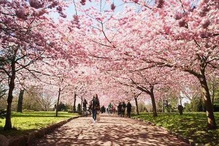 Blossom-festivals-copenhagen