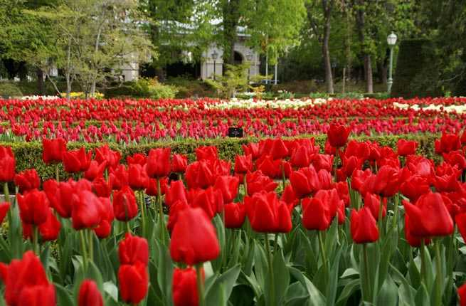 25 ultimate things to do in madrid fodors travel guide for Jardin botanico madrid