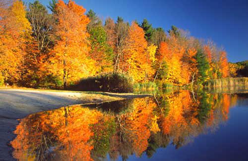http://www.fodors.com/ee/files/slideshows/275/Berkshires-Fall-Foliage-Leaves.jpg