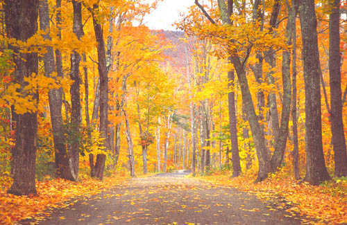 the 6 best fall foliage drives in new england  u2013 fodors