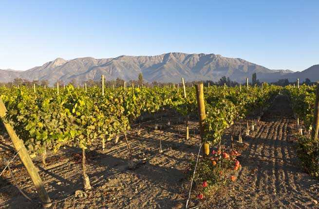 Chile: Maipo Valley