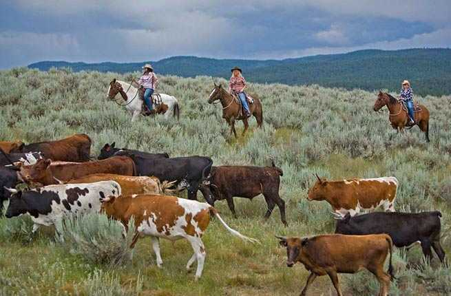 America S 10 Best Cowboy Vacations Fodors Travel Guide