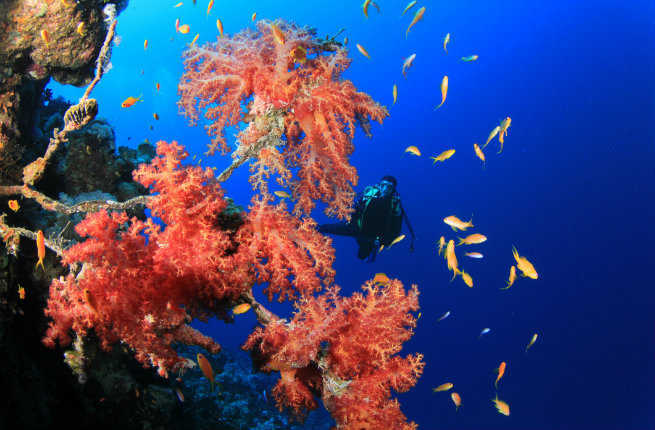 10 Great Scuba Diving Locations
